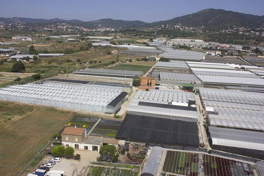 Fotografia-aerea-campos-de-flores-dron