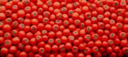 Fotografia-Tomates-Apis